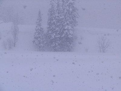 今日は湿った大粒の雪が降っています